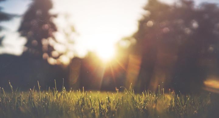 eine Wiese wird von der Sonne angeschienen