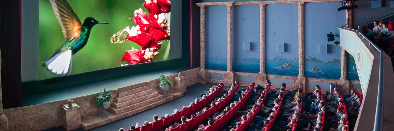 Festival: Filme für die Erde